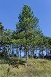 公园风景由Beli Lom河的拉兹格勒的 图库摄影