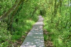 公园风景-白色路在有森林的村庄公园 免版税图库摄影