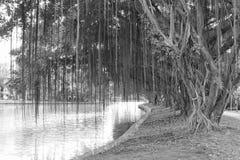 公园,黑白 库存图片
