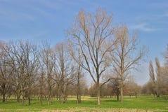 公园-早期的春天-唤醒在一个长的冬天以后的自然 库存图片