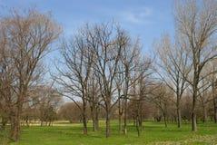 公园-早期的春天-唤醒在一个长的冬天以后的自然 免版税库存照片