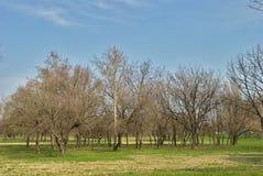 公园-早期的春天-唤醒的自然 免版税库存图片