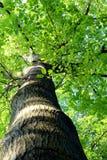 公园003 免版税库存照片