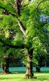公园001 免版税库存图片
