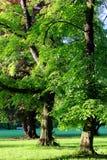 002公园 图库摄影