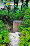 2公园 库存图片
