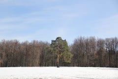 公园` Tsaritsyno ` 库存照片