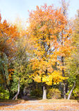 公园Frankivsk 库存图片