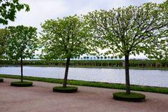 公园petergof彼得斯堡俄国春天st 库存照片