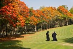 公园safa 图库摄影