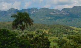 公园Vinales,古巴 免版税库存图片