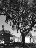 公墓树 免版税库存照片