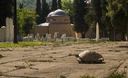 公墓7 库存图片