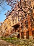 公寓在春天 免版税库存图片