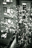 公寓城市纽约 库存照片