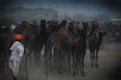 公平的骆驼的,普斯赫卡尔,拉贾斯坦,印度头巾人 免版税库存照片