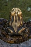 公开和室外装饰:以青蛙的形式一朵喷泉浪花 库存图片