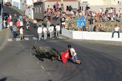 公牛充电在一个年轻人 库存照片