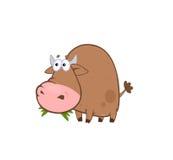 公牛吃滑稽 库存图片