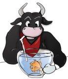 公牛喜欢喝水 皇族释放例证