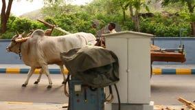 公牛推车在农村家 股票录像