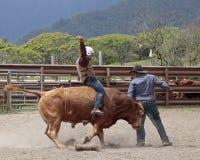公牛爆沸 库存照片
