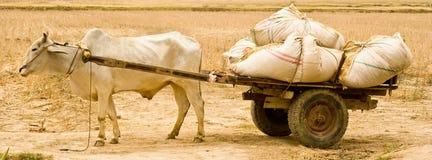公牛运载的购物车浪费 免版税库存照片