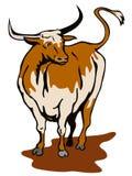 公牛长角牛得克萨斯 免版税库存图片