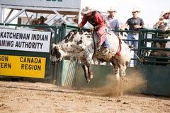 公牛骑马 免版税库存照片