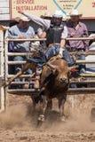 公牛骑马 库存照片