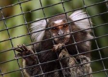 公用小猿 库存照片