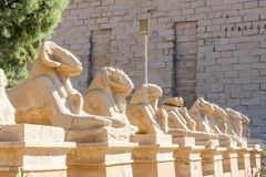 公羊带头的狮身人面象的大道在卡尔纳克寺庙的 埃及卢克索 免版税库存照片