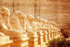公羊带头的狮身人面象的大道 库存图片