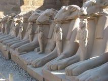 公羊朝向狮身人面象在Karnak寺庙。 卢克索。 库存照片
