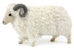 公羊 图库摄影