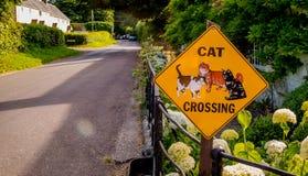 公路安全标志猫横穿 免版税库存照片