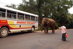 公车运送通配大象的人 免版税库存照片