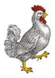 公鸡传染媒介1009 免版税库存照片