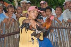 公鸡战斗机菲律宾人 免版税图库摄影