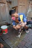 公鸡战斗机训练活动在老城三宝垄 免版税库存照片
