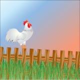 公鸡日出欢迎 免版税库存图片