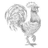 公鸡的传染媒介例证 库存图片