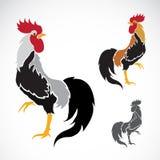 公鸡的传染媒介图象 图库摄影