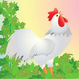 公鸡黎明唱歌 库存照片