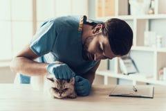 公Veterinarian Examining Cute Grey医生猫 库存图片