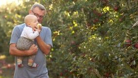 六个月婴孩首先看见了苹果并且拉扯它入他的嘴 祖父拿着他的胳膊的孙子,走在  影视素材
