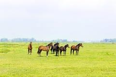 六匹马在一个绿色草甸 库存照片