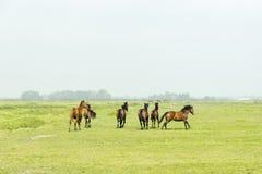 六匹马在一个绿色草甸 库存图片