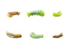 六只蠕虫的汇集在行动的 免版税库存照片