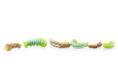 六只蠕虫的汇集在行动的 图库摄影